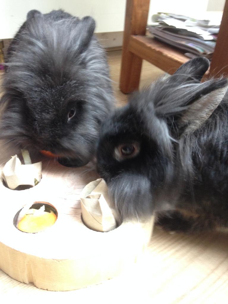 Dolly en Gabbertje eten samen