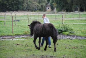 Kinder- en Jeugdtherapie met inzet van paarden.